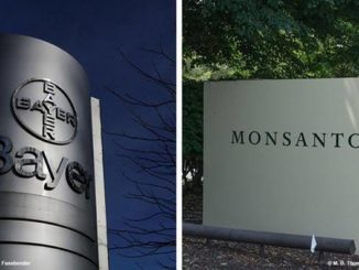 The impact of Bayer-Monsanto merger on GMOs in Europe and Africa