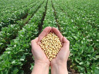 GMO-crops-2